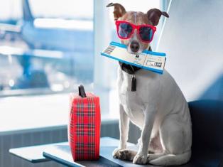 Основные правила перевозки животных в самолёте фото №1