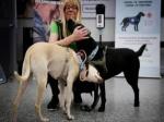 В аэропорту Хельсинки начали проверять на COVID-19 с помощью собак