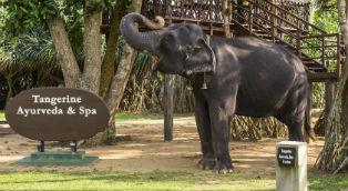 Шри Ланка Tangerine Beach Hotel 4*