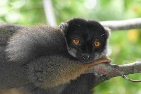 Мадагаскар Южные провинции Мадагаскара