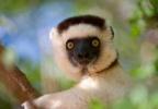 Северное  путешествие по Мадагаскару