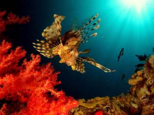 Мертвое море + Красное море