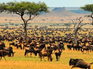 Танзания Восхождение на Килиманджаро за 8 дней
