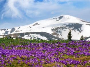 9 мая на Драгобрате + Долина крокусов + Яремче