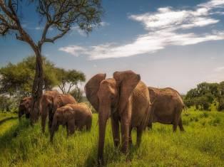 Сафари в Танзании на Новый год 2021