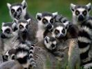 Мадагаскар (юг острова): большое приключение