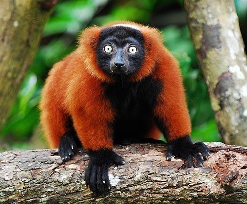 Мадагаскар Мадагаскар: путешествие тропическими лесами национального парка Масуала
