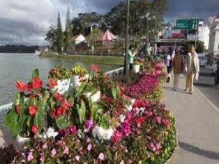 Фестиваль цветов в Далате 23.12.2019