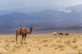Монголия Кочуя по Монголии
