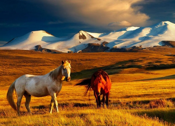 Монголия Монгольское путешествие