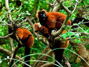 Мадагаскар Маршрут по югу Мадагаскара