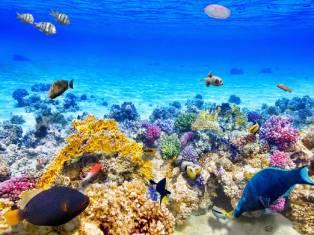 Египет Весенние каникулы в Египте! Лучшие предложения для Вас!