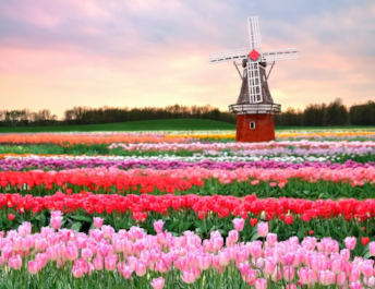 Нидерланды Амстердам и Брюссель
