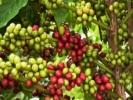 Кофейный мир Вьетнама