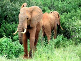 Танзания Майские в Африке: путешествие по Уганде, Кении, Танзании и отдых на Занзибаре