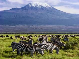 Новогоднее сафари в Кении