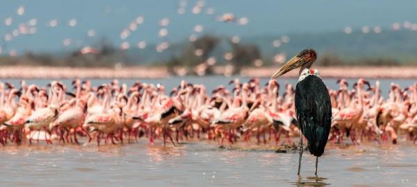 Национальные парки: озеро Найваша, озеро Накуру Масаи Мара
